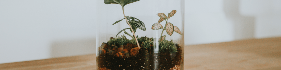 terrarium upcycle old candle